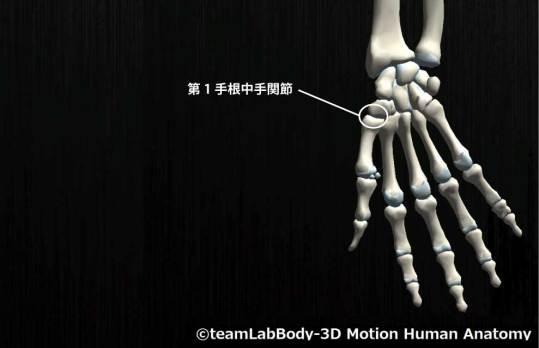 第1手根中手関節