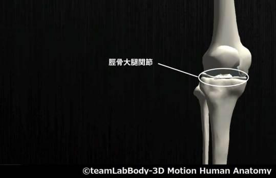 脛骨大腿関節