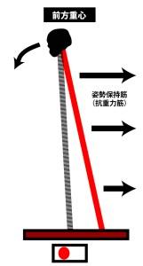 立位姿勢|重心線の位置|抗重力筋