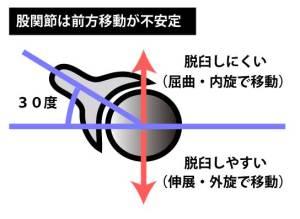 股関節の臼蓋の向き
