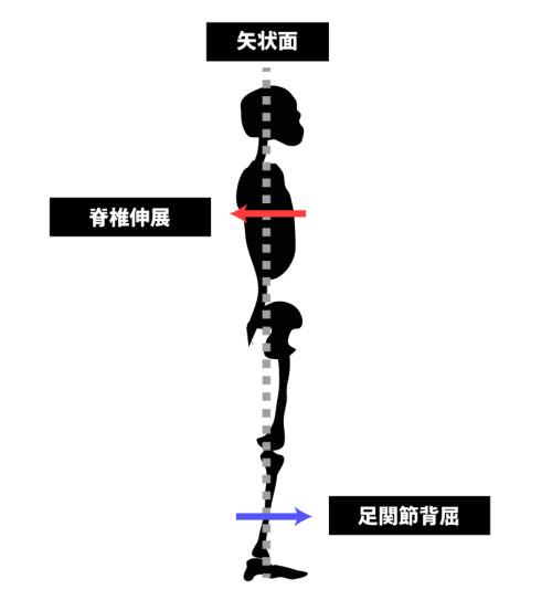 足関節背屈の姿勢調整