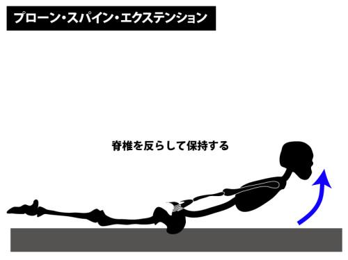 筋トレ|プローン・スパイン・エクステンション