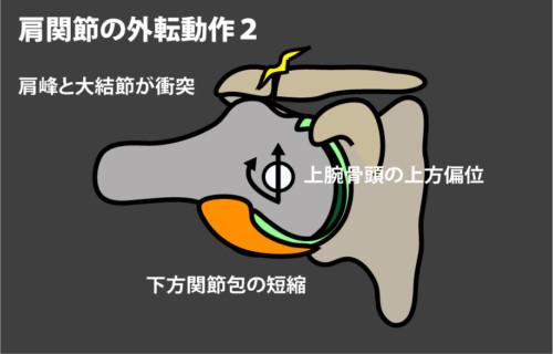 肩関節の外転動作2
