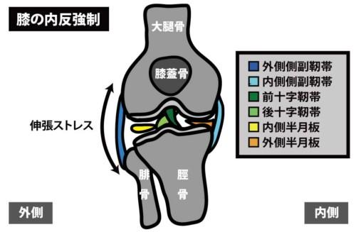 膝関節外側の痛み|外側側副靭帯