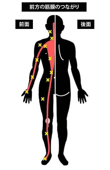 前方の筋膜のつながり