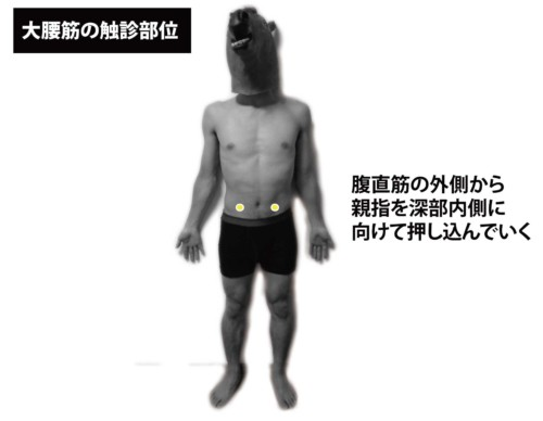 大腰筋の触診部位1