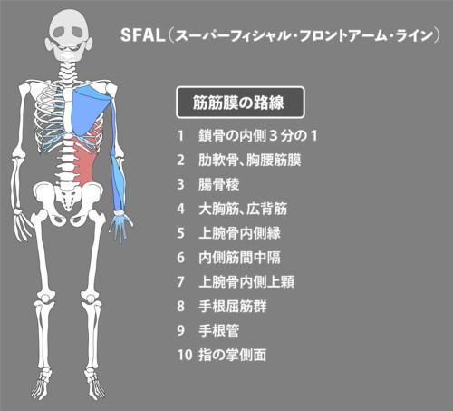広背筋:筋膜:SFAL