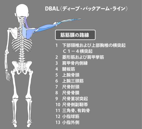 アナトミートレイン:筋膜:DBAL