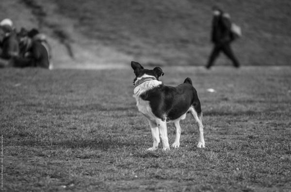 Kleiner Hund blickt sich um
