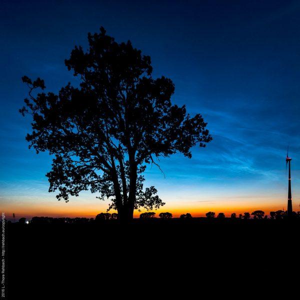 Baum und Windrad im Gegenlicht vor Sonnenuntergang