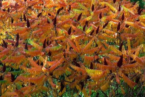 Herbst - Impressionen – Rehbach.eu - Bildermacher