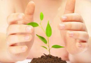 reiki en las plantas