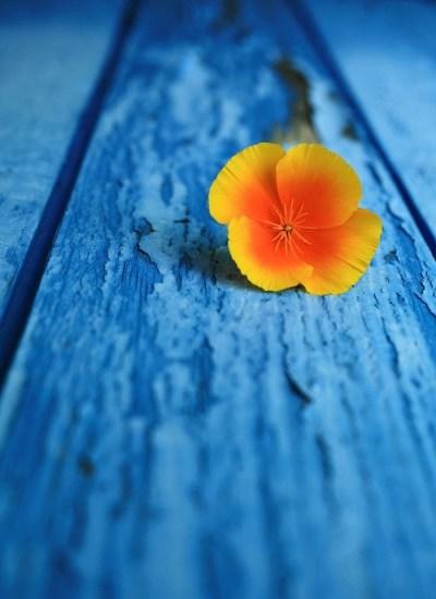 yellow flower blue boards