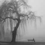 I Know Why the Willow Weeps