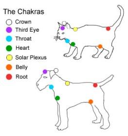catDogChakras1