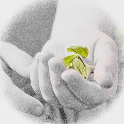 El milagro de las manos sanadoras