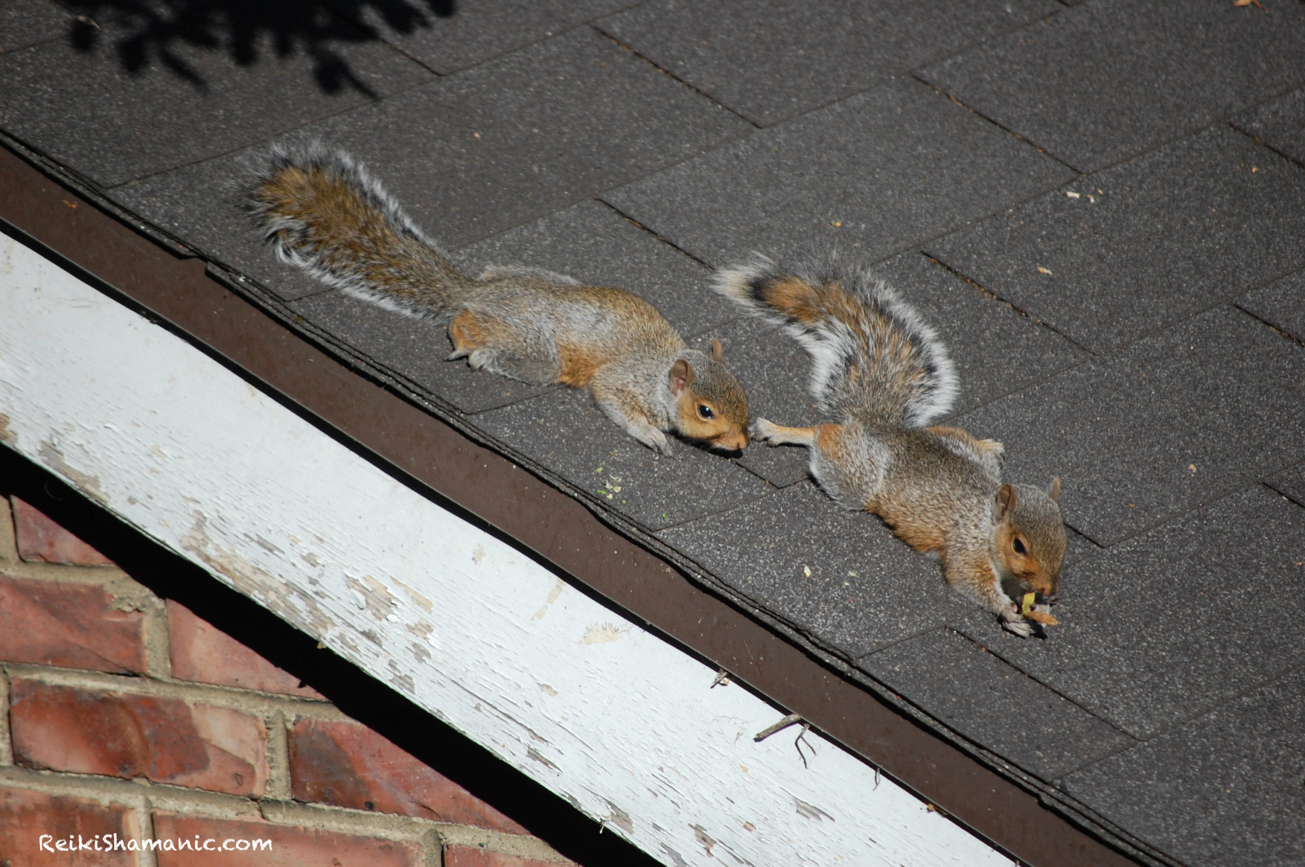 What Do Squirrels Do On Sunny Days?
