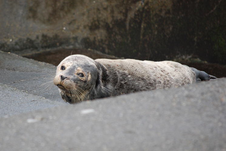 Reiki And The Harbor Seal