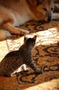 Puma and Bagheera ©Rose De Dan www.reikishamanic.com