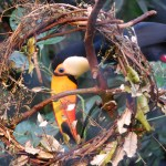 Toucan Wreath ©2013 www.reikishamanic.com