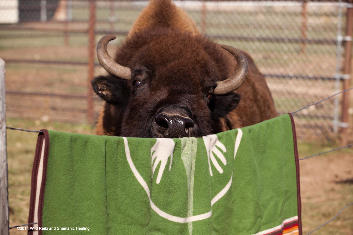 Blanket For The Buffalo