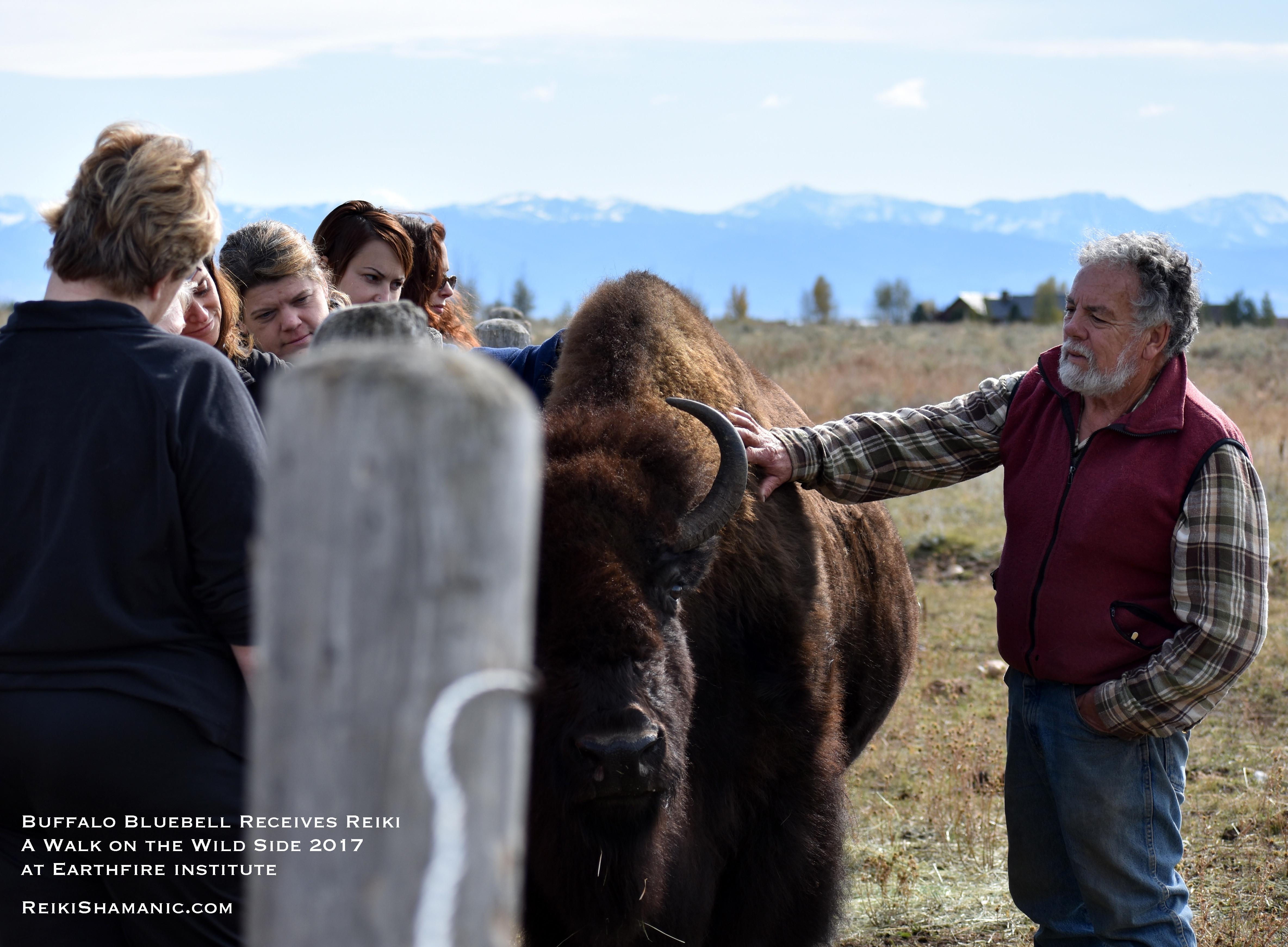 Buffalo Bluebell's Reiki Herd