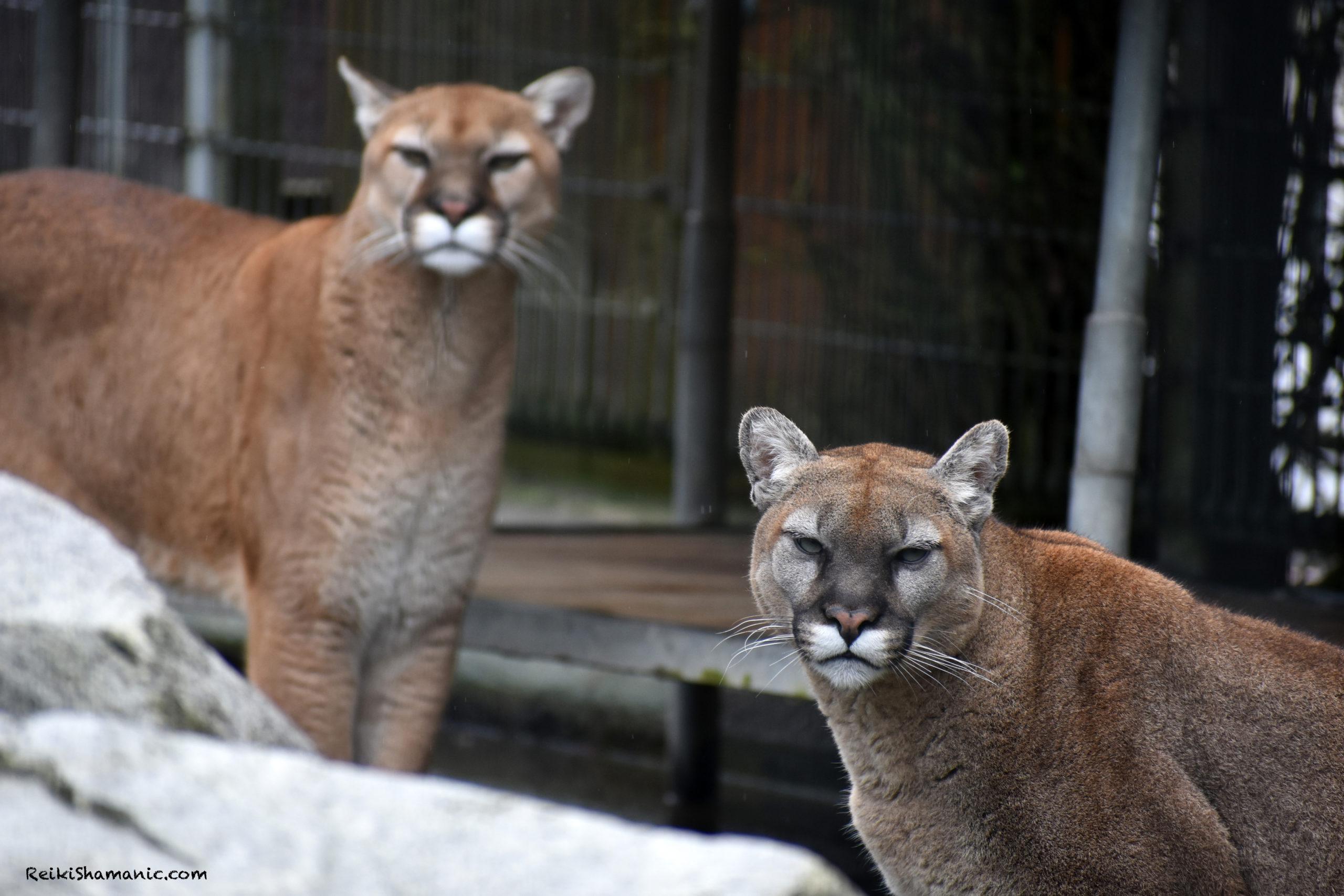 Zoo Animal Ambassador Greetings