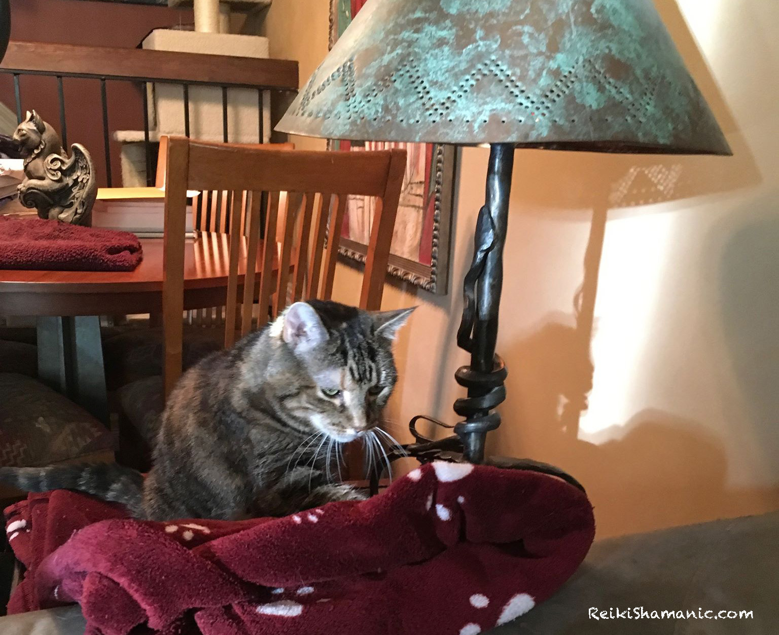 A ReikiShamanic Client Story: Cat Baby Shank