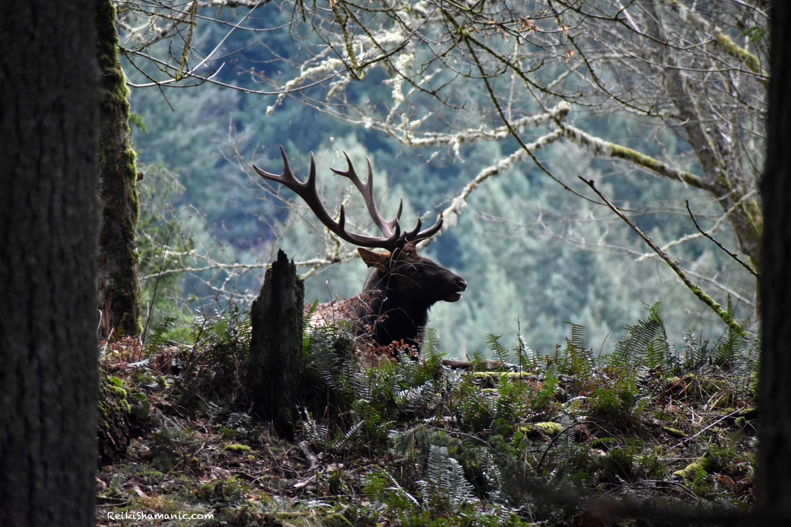 The Animal Shaman, The Elk, And The Sword