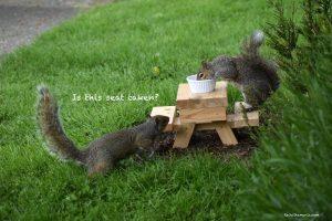 Squirrel Picnic At The Wild Rose Café