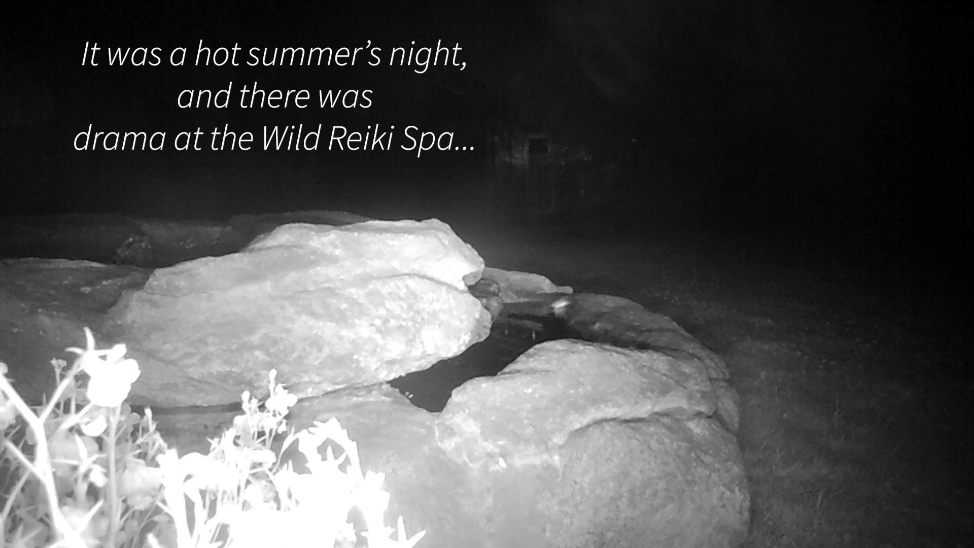 Heat Wave Drama At The Wild Reiki Spa