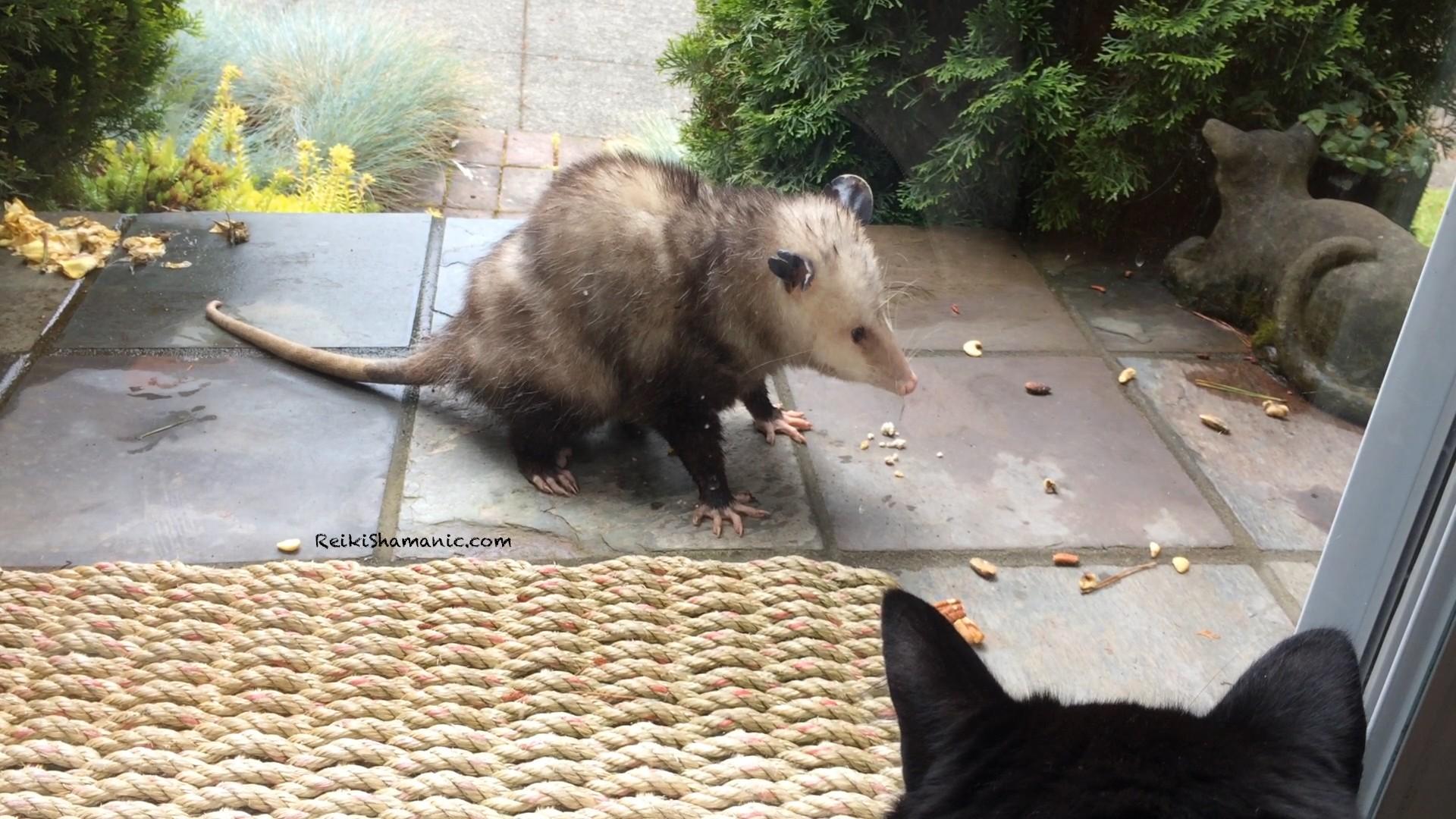 Opossum's Front Porch Visit