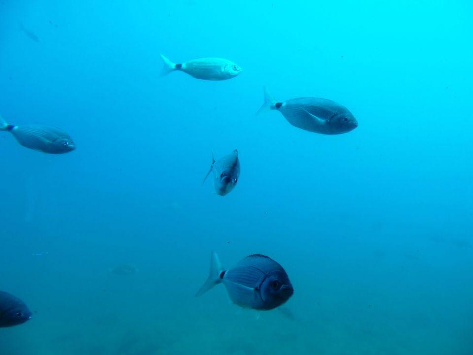 fondo marino (1)