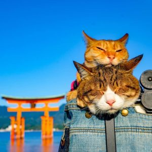 animales viajeros cats
