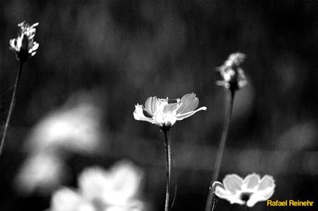 Laranja Flor Infrared