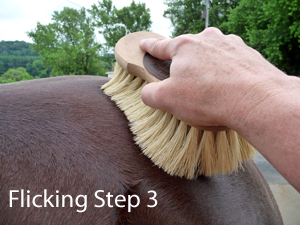grooming your horse with a dandy brush