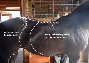 horse saddle fit length