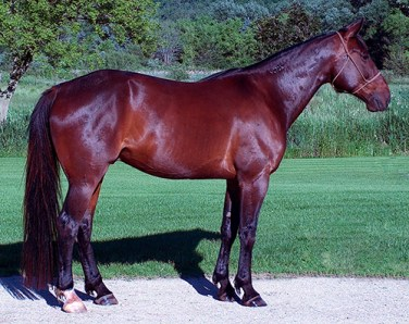 shiny bay horse after grooming