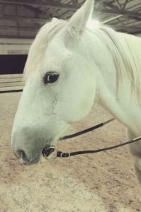 white horse with a leather snaffle