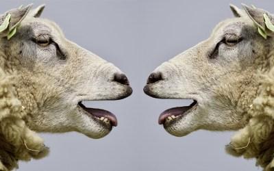 ¿Cómo comunicar en forma objetiva?