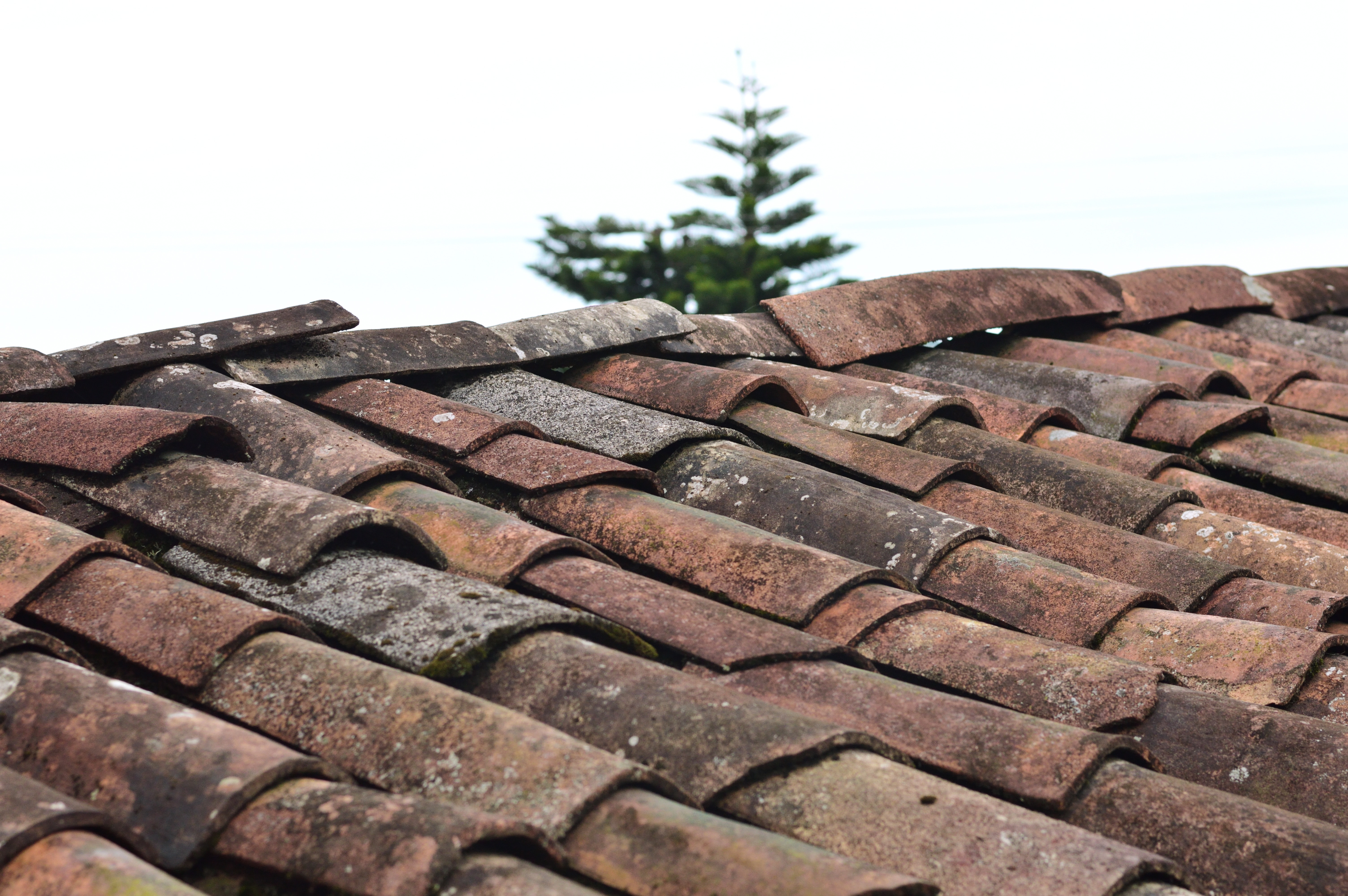 Roof the needs inspected