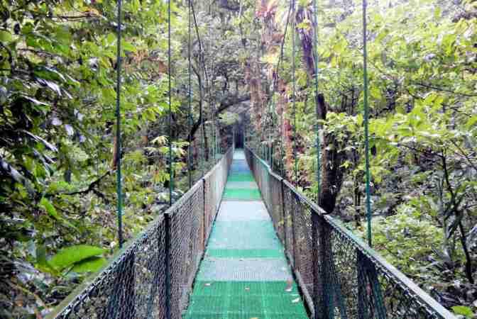 Tree Top Walkways - Sky Walk