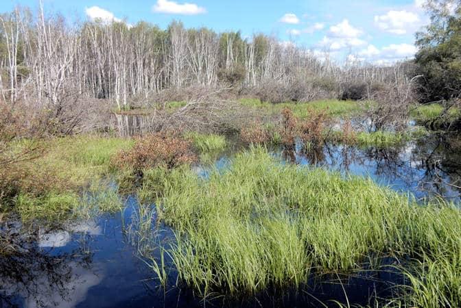 Creamers Field Migratory Waterfowl Refuge, Fairbanks, Alaska