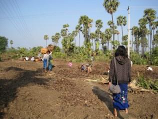 Palmfrucht-Plantage
