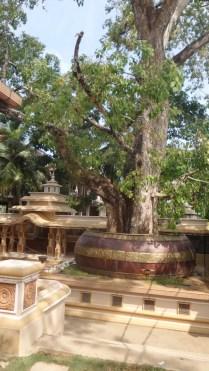 Sri Vijayarama Viharaya