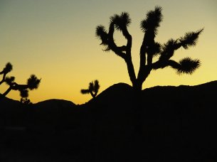 Sonnenuntergang Joshua Tree