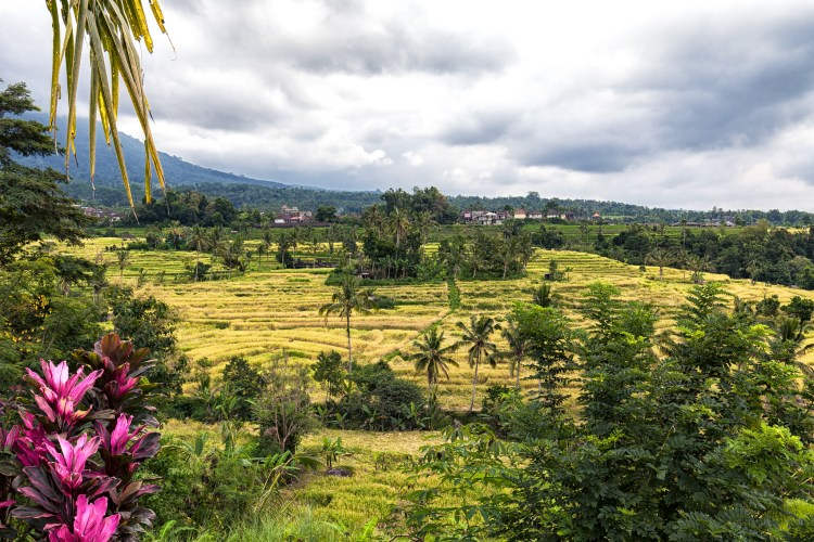 Famous rice terraces in Bali
