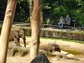 Zoo Wuppertal - Elefanten