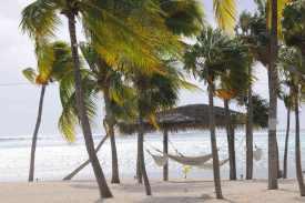 In Hängematten unter Palmen träumen - möglich auf Little Cayman