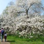 Blütenpracht in Kew Gardens